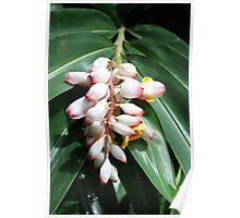Fabulous Flowers in Fiji Poster