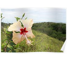 Hibiscus in Fiji Poster