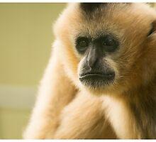 Tan Gibbon by LizardSpirit