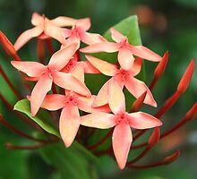 More Flowers in Fiji by Bami