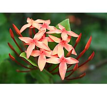 More Flowers in Fiji Photographic Print