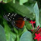 Butterfly and Flower by ienemien