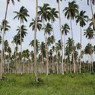 Coconut Plantation Fiji by Bami