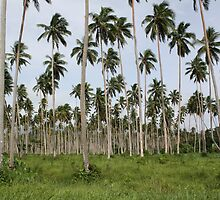 Coconut Plantation Fiji by Bami