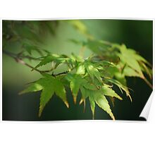 Cool Green Maple Leaf Poster