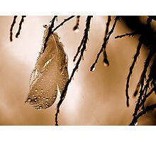 Angel Feather Photographic Print