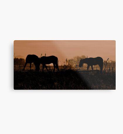 Equine Dawn Metal Print