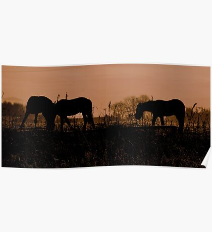 Equine Dawn Poster