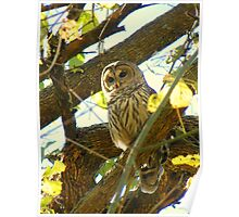 Barred Owl- Are you Looking for Me? Poster