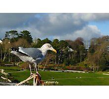 Bird's Eye View ~ Lyme Regis Photographic Print