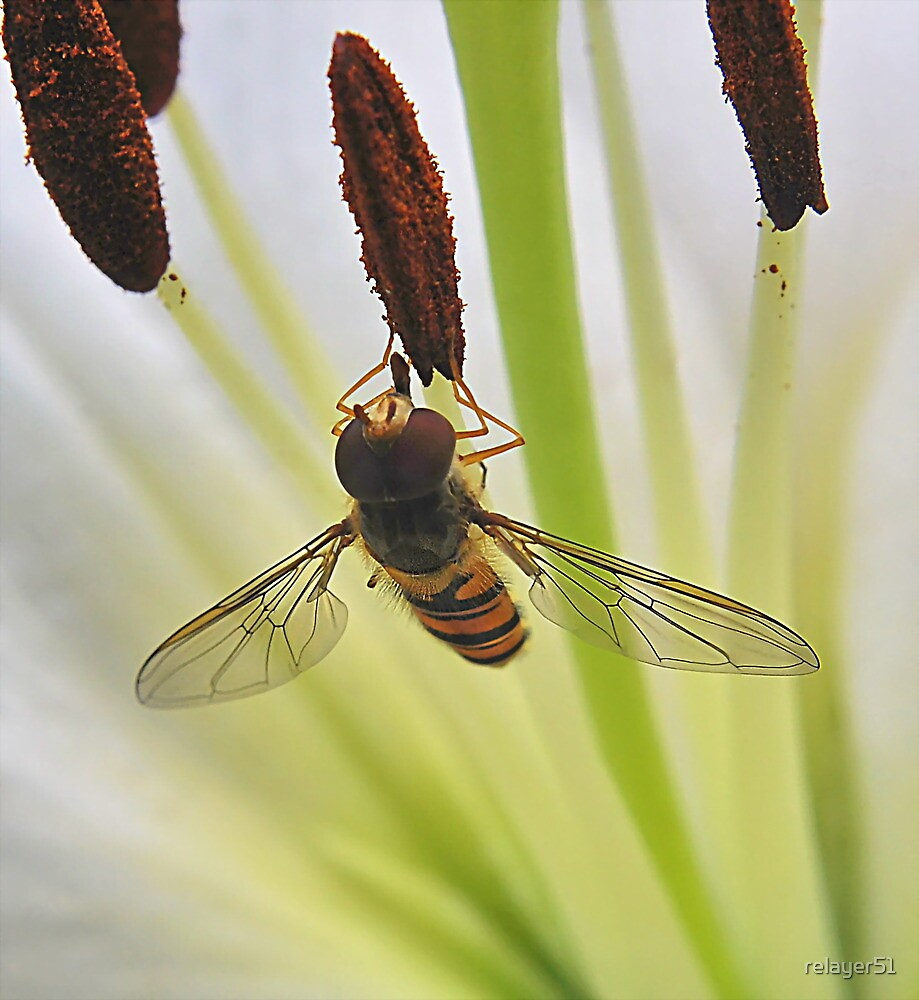 Hoverfly on Stamen by relayer51