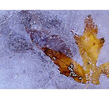 Frozen in time Photographic Print