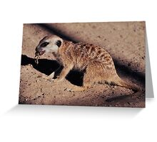 Random Meerkat Greeting Card