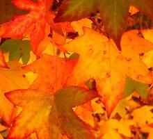 Autumnleaves1 by Robert Munden