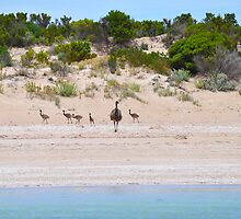 A family day at the beach by Ian Berry
