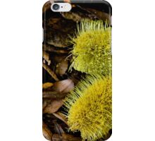 Yellow Banksia - Bev Woodman iPhone Case/Skin
