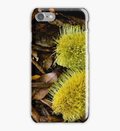 Yellow Banksia - Bev Woodman iPhone Case/Skin