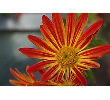 Bright Nature Photographic Print