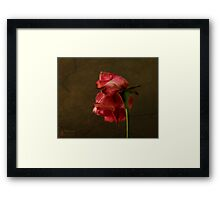 wilted beauty Framed Print
