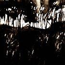 fuji.... through a black forest by banrai