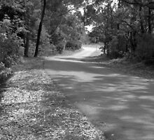 The Road from Kamaroi by Janie. D