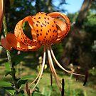 Very orange by Nella Khanis