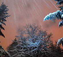 Snow Squall by Tori Snow