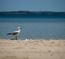 Rockingham Beach by mattsibum