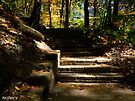 Stone Steps by Marcia Rubin