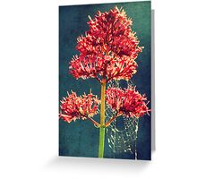 The spiderweb Greeting Card