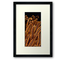 detail coral Framed Print