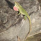 Smoky Mountains Habitat for Anole Lizards by JeffeeArt4u