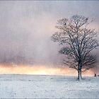 Winter Sunrise, Wramplingham, Norfolk by DaveTurner