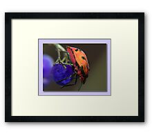 My Purple Ball Framed Print