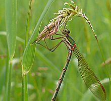 Dragonfly by Josie Jackson