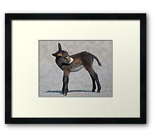 Baby Donkey Framed Print