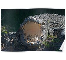 Crocodile with Mouth Wide Open Poster