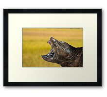 Alligator Snapping Turtle Framed Print