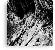 Driftwood 4 Canvas Print