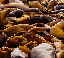 Sea Lion Pile by Avi Love