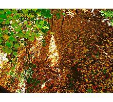 Leaf Ravine Photographic Print