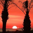 Palm sunset by jozi1