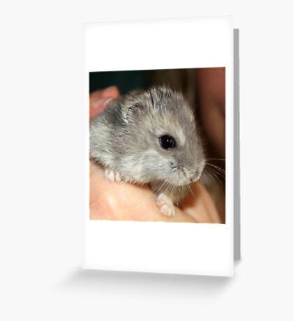 Stitch the Hamster Greeting Card