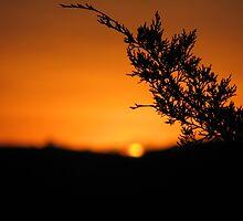 Cedar Sunset by davidsimmons
