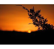 Cedar Sunset Photographic Print