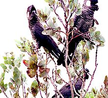 Endangered - Short-billed Black Cockatoo by Marilyn Harris