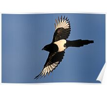 Flight Of The Magpie Poster