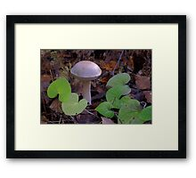 Fungi with violets Framed Print