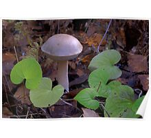 Fungi with violets Poster