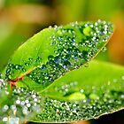 Natures Water Droplets by Derek McMorrine